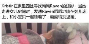 暖狗Raven